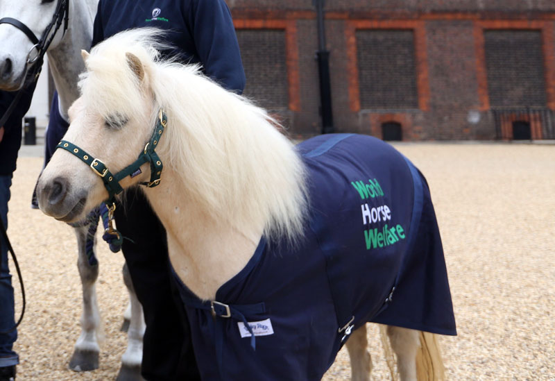 Pamela is preparing for the Burghley Horse Trials, and has had her first dressage lesson with Carl Hester.