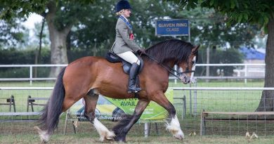 Nikki Cox and Bert won the World Horse Welfare Rescue Classes championship titleat the Royal Norfolk Show on Thursday.