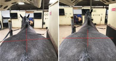 Keeping it straight: Symmetry and suppleness key to a happy horse