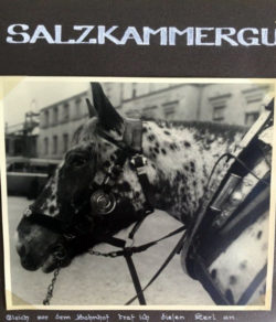 This horse met Jochen Schleese's father as he left a train station in Salzberg, Austria.
