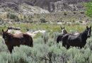 House committee's change to spending bill imperils America's wild horses
