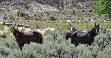 Wild horses grazing in New Mexico.