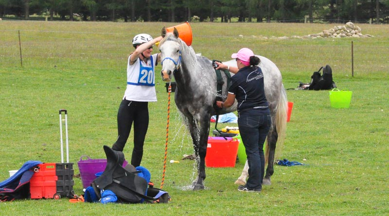 Heart and respiratory rates should be monitored to assess just how hot the horse is.