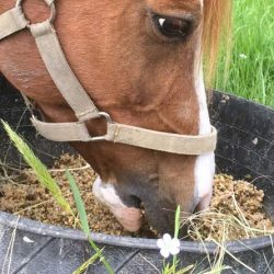 Are you keeping your horse fat by not feeding him?