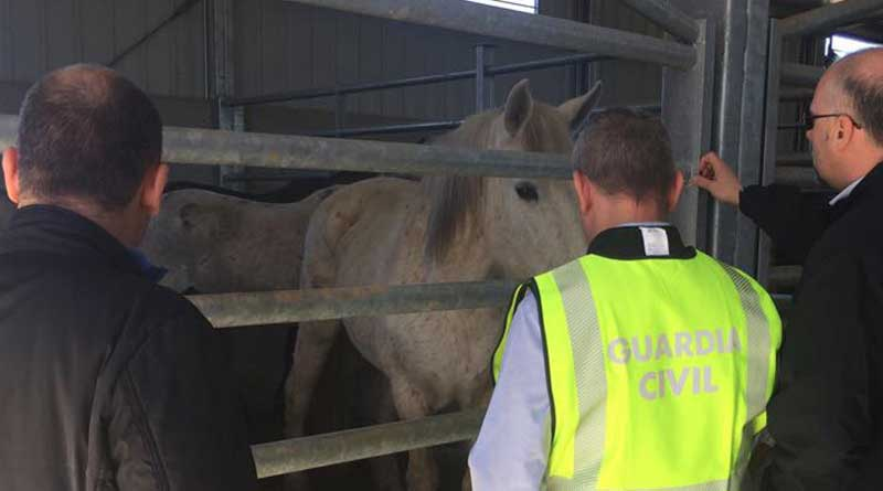 Sixty-five arrests in Europe over alleged illicit trade in horse-meat