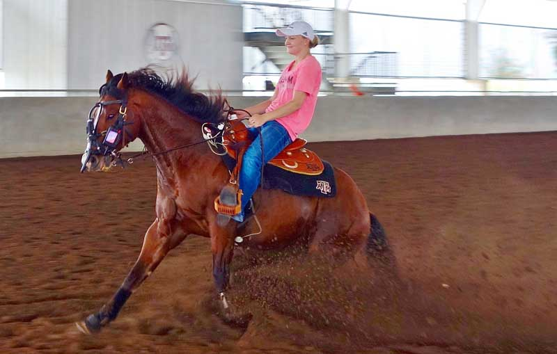 One of the reining horses involved in the study. Researchers from Texas A&M University developed a standardised testing protocol specifically for reining horses.