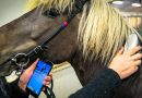 Smart tech: New RFID reader makes equine identification oh so easy