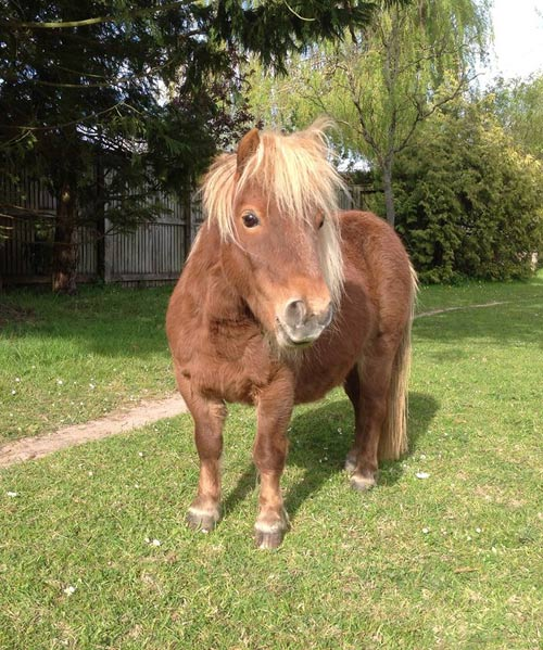 The impossibly cute Mini Fat Pony.