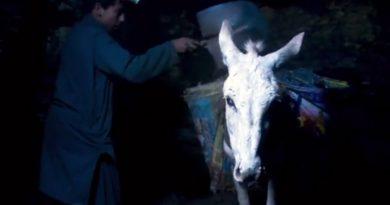 'Midsomer' star lends voice to desperate plight of coal mine donkeys