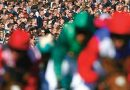 Lower race-day injury rate found among NZ's flat-racing thoroughbreds