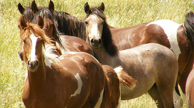 Pressures on BLM's wild horse budget described in just-published review