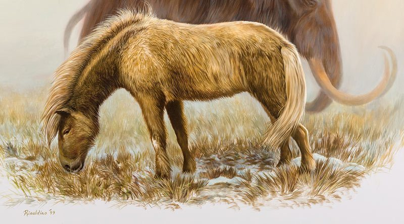 The Yukon Horse (E. Lambei).