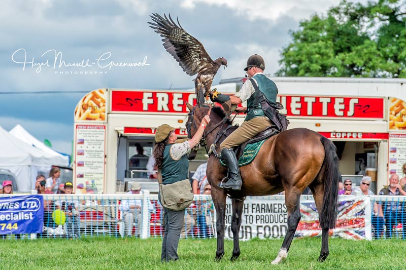 Martin Whitley and Weeam in a falconry display.
