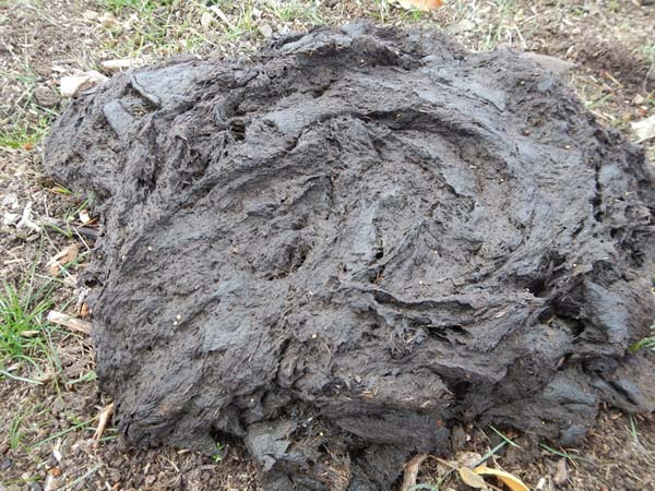 Cow manure: Highly digested plant materials offers little for fire damaged soils.