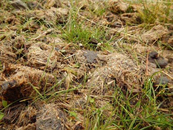 Wild horse droppings contain embedded native seeds, humus, microorganisms and nutrients that rebuild fire damaged soils.