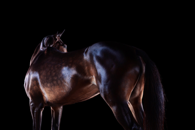Polo pony fine art photography by Ramon-Casares.