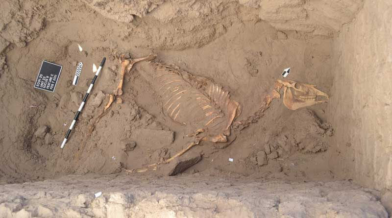 The horse was remarkably well preserved.