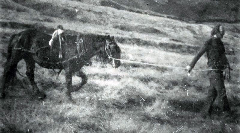 Walter Lloyd with Hades Hill Charlie on the way to Wardle to collect a dog cart, in July 1975.