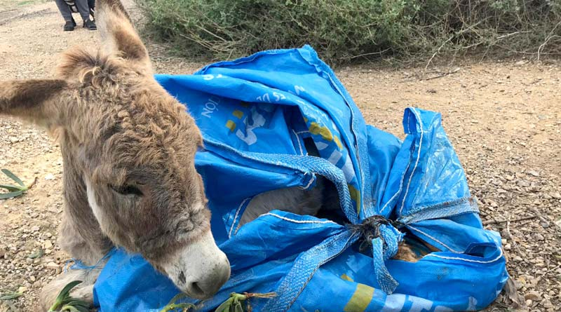 Sad Ending For Donkey In A Bag Rescue In Spain Horsetalk Co Nz