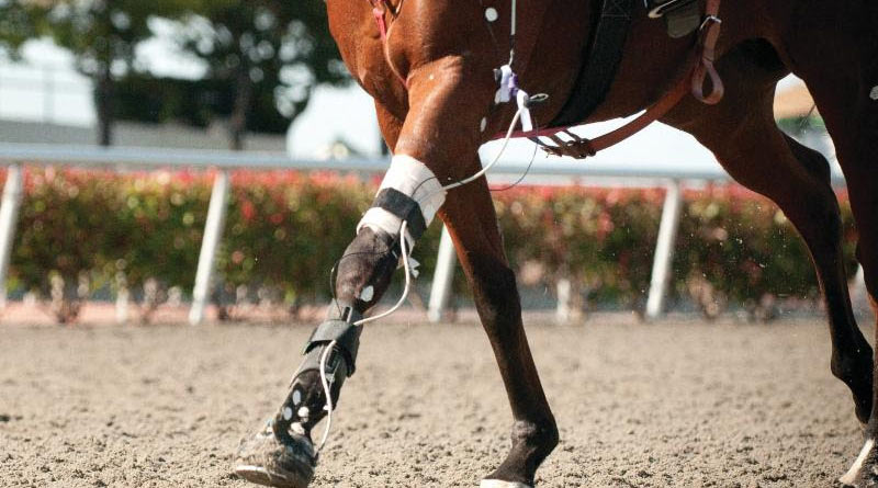 Chris Whitton of the University of Melbourne is leading research into the stride of the racehorse, looking at early injury indicators.
