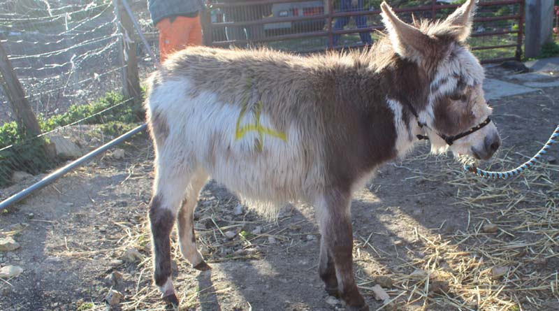Toby was among 14 donkeys rescued recently in Britain's north east.