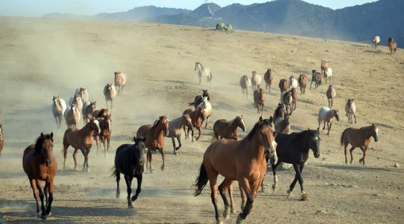Wildhorsesat Return to Freedom's San Luis Obispo, California, satellite sanctuary.