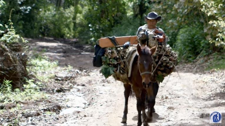 Un caballo de trabajo en Guatemala.